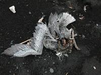 Sans titre (nature morte)
